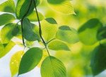 Гадание по листве